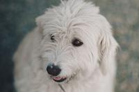 PatrigoneResidence Puppy