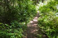 AlpineRoad Hiking