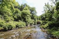TivoliResidence River