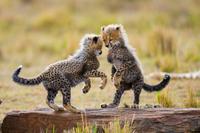 Kenya Safari main shot